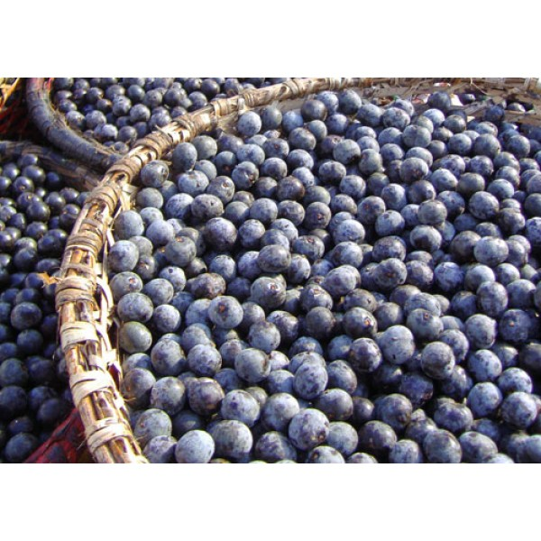 Acai berries  powder bio 50gr ΥΠΕΡΤΡΟΦΕΣ